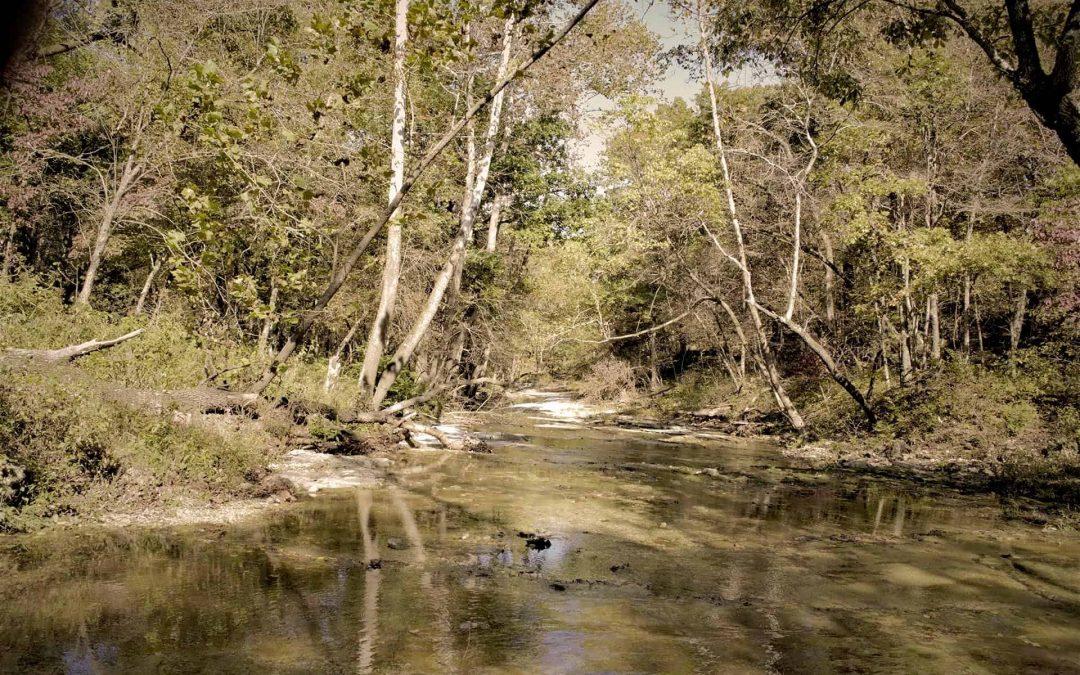 Oklahoma's Natural Treasure, Cookson Wildlife Management Area